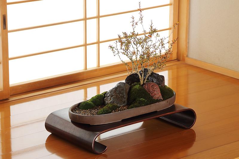 盆景15,000円