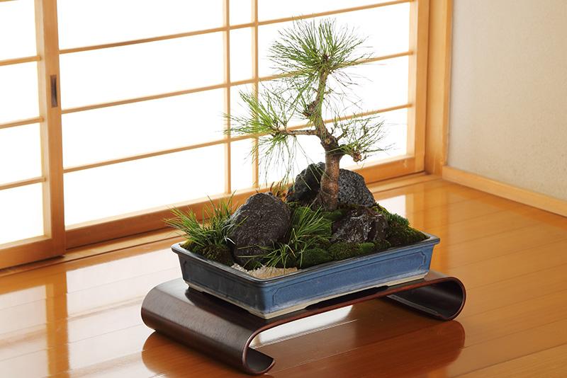 盆景20,000円